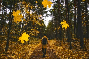 CC0 Public Domain Free for commercial use. Link referral required. https://www.maxpixel.net/Man-Falling-Leaves-Autumn-Colorful-Fall-Walking-1804592